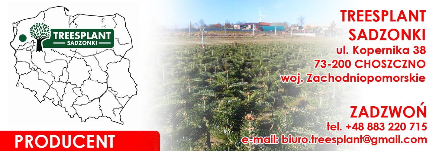 Kontakt z firmą Treesplant przez formularz